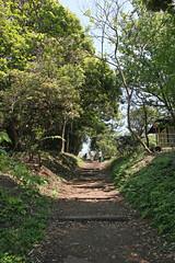 江の島めぐり―龍野ヶ丘自然の森(Forest, Enoshima, 2011)