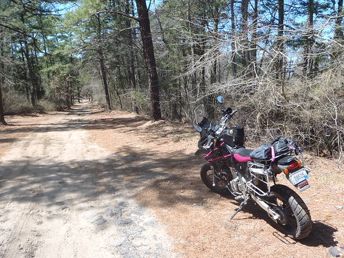 Somewhere in Wharton State Forest