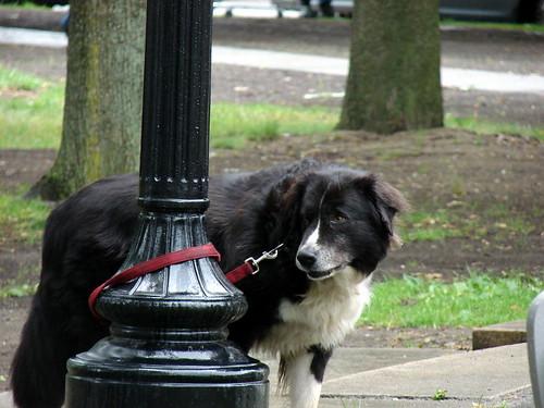 sad dog was sad