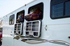 Horses_trailer_window_2