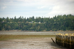 Samish at Low Tide