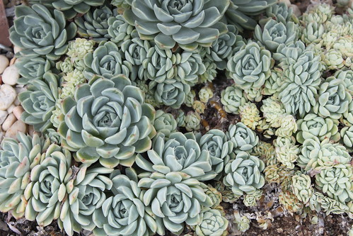 New York Botanical Gardens - Succulents 1