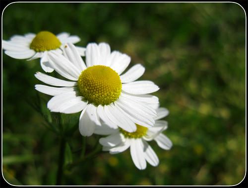 Primavera non bussa, lei entra sicura... by [Piccola_iena]