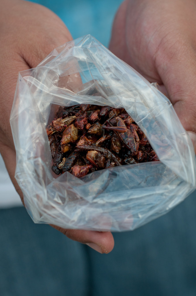 Crickets to eat in a bag