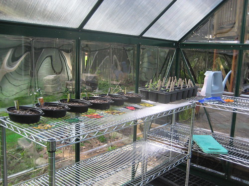 seed trays in the green house