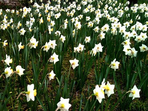 Spring by aimeesblog