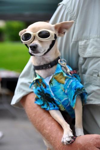 Pooch in shades