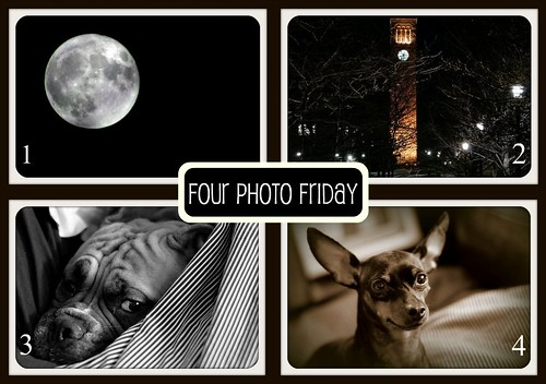 Four Photo Friday 3/25/11 by theartsybutterfly