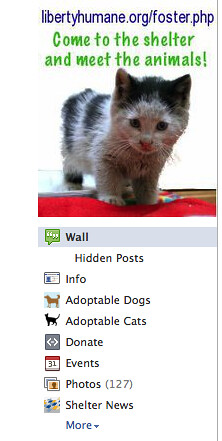 Dogs & Cats Application