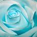 ice blue rose