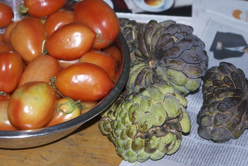 Paste tomatoes and custard apples