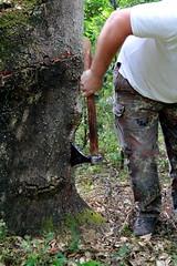 Decortica della quercia da sughero  02