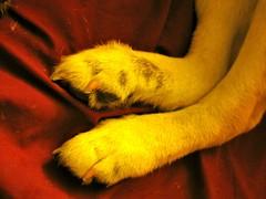 Allergy feet - 2010