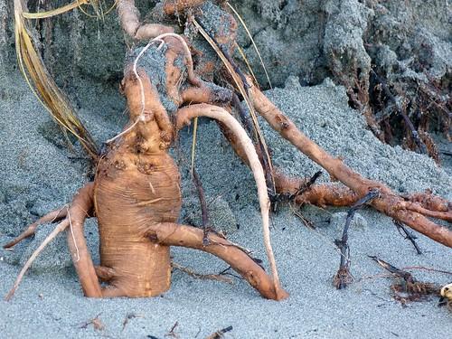 the beach faeries' still