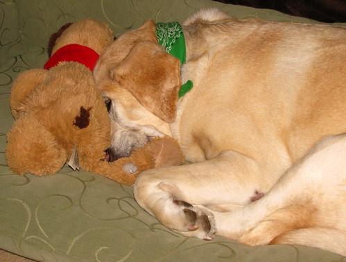 Sadie snuggling toy