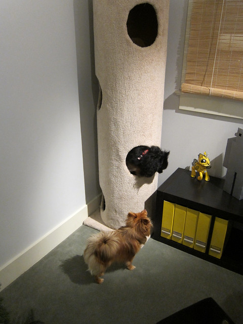 Dogs & the Cat Tower