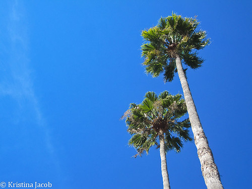 A Pair of Palms
