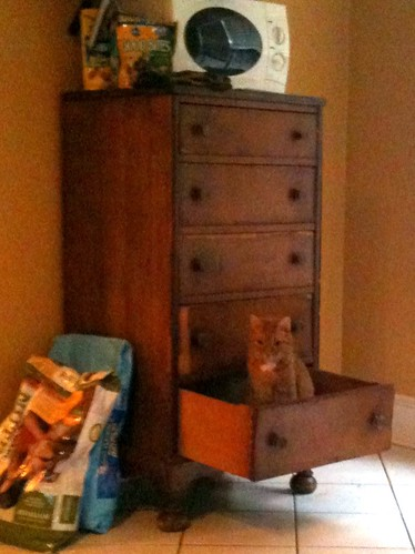Ickis the Cat in Chester Drawer