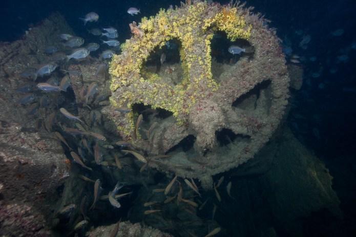 Cogwheel on the Sir William McPherson wreck
