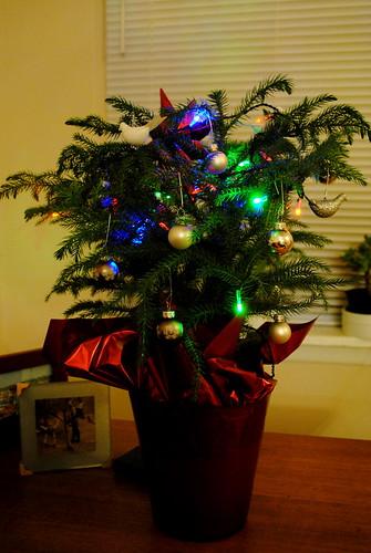 My Tiny Tree