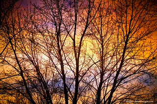 Magical Colorful Sunset Tree Silhouette