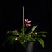 Finding support for melancholy flower