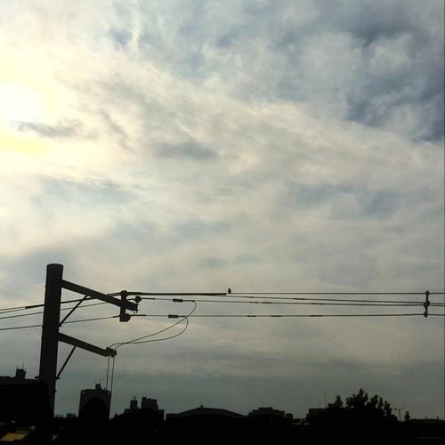 今日の大阪、ちと曇りです。大晦日まであと二日、みんなー、がんばろー~~~~~~~!