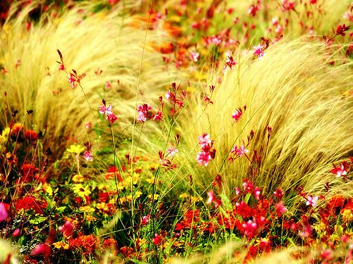 Digital_photography_[wallcoo_com]_wild_flowers_03