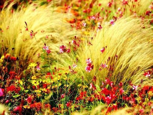 Digital_photography_[wallcoo_com]_wild_flowers_03