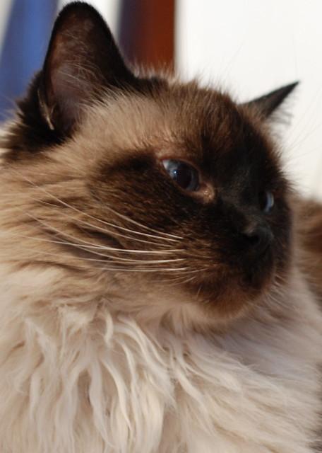 Mani, Jan 2011