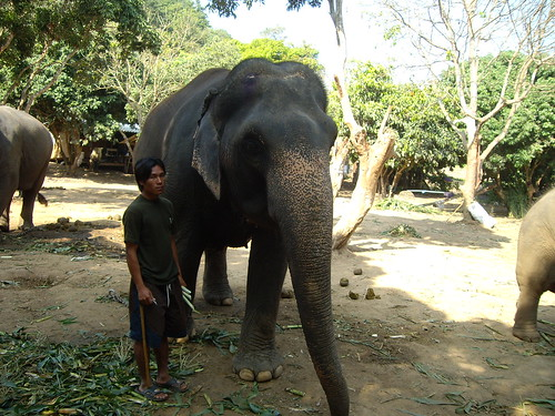 Elephant + mahout = winning combination.