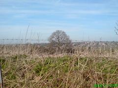 Start of Spring 2011, Totteridge