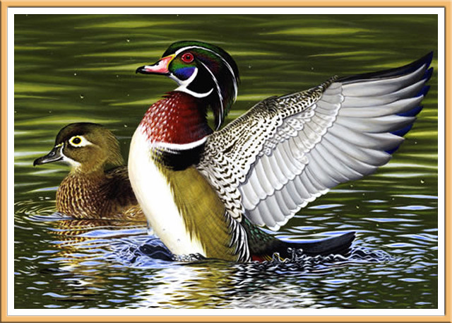 Beautiful Ducks by Charles Black
