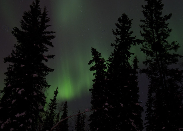 Aurora in the Trees