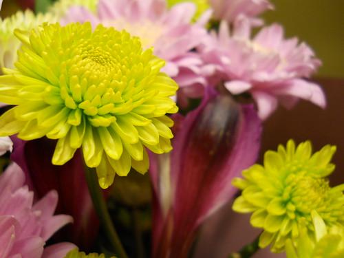 vday flowers VI