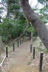鴨居原市民の森(こもれびの道、Kamoihara Community Woods)