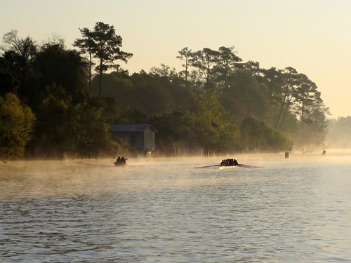 Skulling in early morning fog