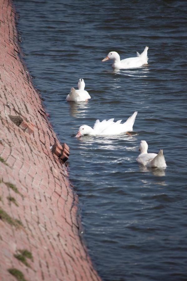 20110205_01_Beautiful Duckling_11