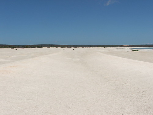 Shark Bay's Shell Beach