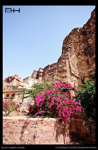 Meherangarh fort from near the Chokelao gardens