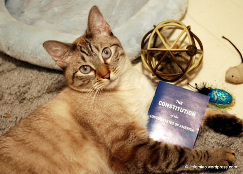 constitution cat