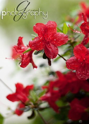 April showers ...