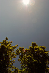 Sun, Blue sky and tree