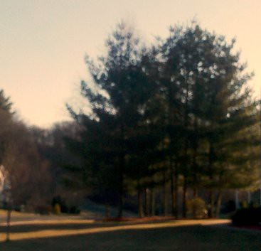 Seeing trees, cropped