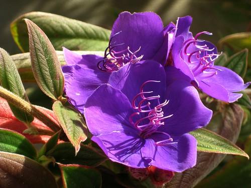 blooming by dyannaanfang