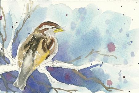 20110409_sparrow_step5