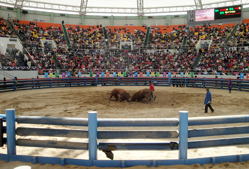 The Bullfighting