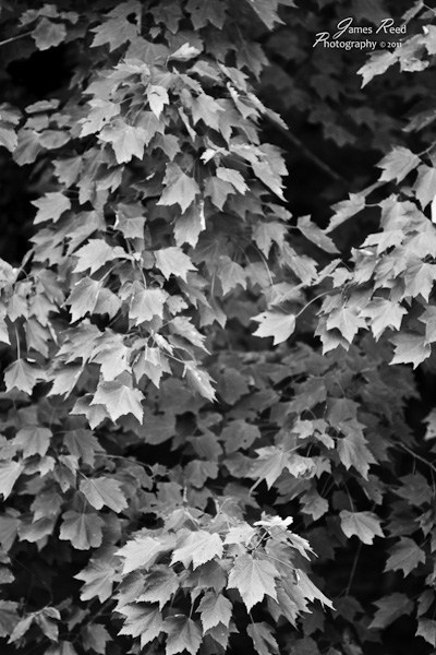 An abstract black and white leaf treatment.