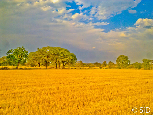 Fields at Chhindwara