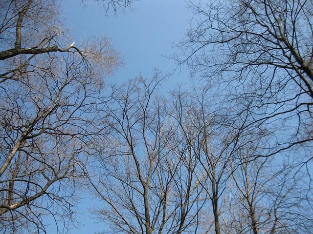 Copaci